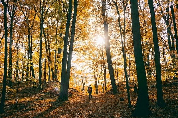 Our top places for an autumnal walk